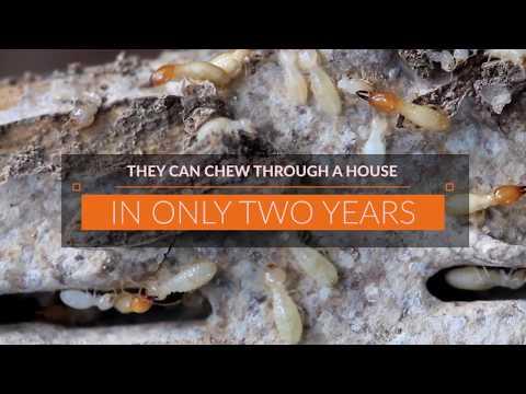Termite Damage In Florida Termite Awareness Week Karen