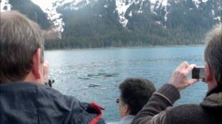 Phillips 26 Glaciers Cruise