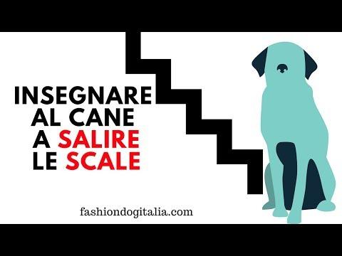 Insegnare al cane a salire le scale: come fare?