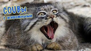Подборка Кубов с животными / Смешные кошки / Coub animals / Cube 2018