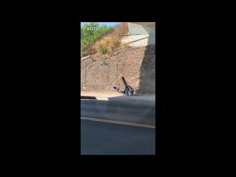 Graphic Video: Officer-involved shooting