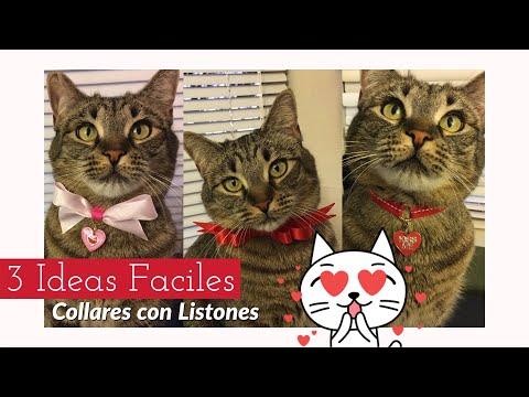 Collares para gato con listón |3 IDEAS FACILES|