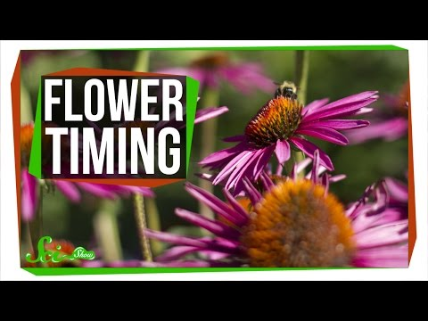 How Do Flowers Know When to Bloom?
