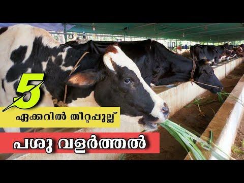 പശു വളർത്തൽ|KAPPIL DAIRY FARM|CATTLE FARM IN PALAKKAD|ക്ഷീര കൃഷി| MILK PRODUCTION|FARM IN KERALA