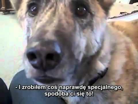 Powiedział psu, że zjadł wszystko z lodówki!