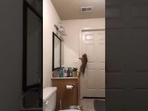 Katze öffnet Tür