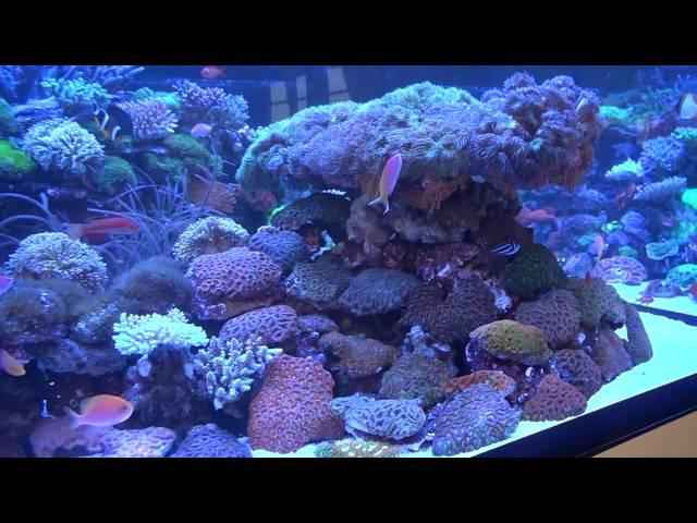 100.000 € Reef Tank, De Jong Marinelife, Interzoo 2016