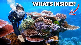 Diving the Great Barrier Reef | Australia's Underwater Paradise