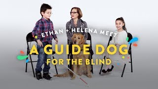 Kids Meet A Guide Dog for the Blind (Ethan & Helena) | Kids Meet | HiHo Kids