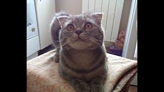 Кот просит погладить его)
