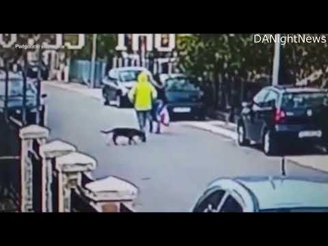 Brave Dog saves woman from robber