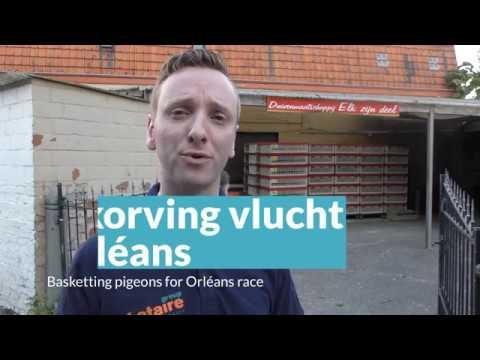 Video Inkorving Orléans in duivenlokaal Elk Zijn Deel, Aalter-Brug (BE)