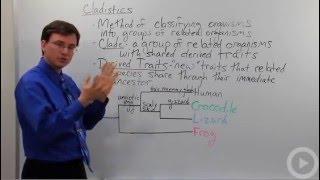Evolution - Cladistics