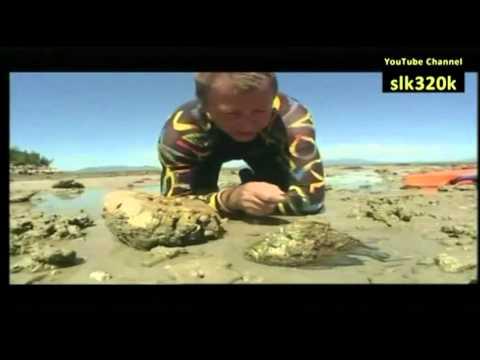 تعرف على Stone Fish السمك الحجري / الصخري