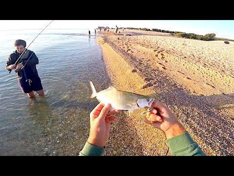 Pesca video di un abramide comune nellinverno su una corrente