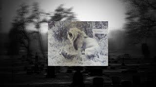 Gambar cover [FREE] SMOKEPURPP x RONNY J TYPE BEAT