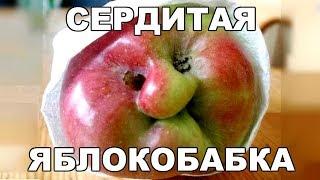 Ржачные приколы. Сердитая яблокобабка.