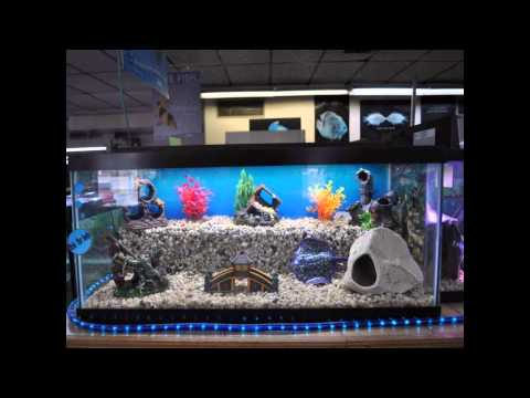 Cool Aquarium for Home Decoration Setup Ideas with Different Types of Aquariums In the world