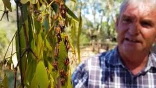 Mistletoe - Baan