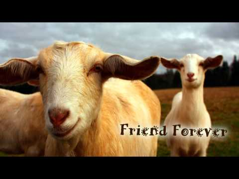 Royalty Free Music #205 (Friend Forever) Dubstep/Techno/Vocaloid/Sonika