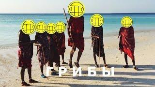 Грибы - Базару нет! (Zanzibar - fun version)
