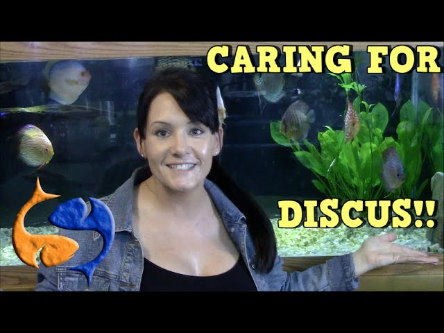 Caring for Discus! Talkin Discus Presented by KGTropicals!!