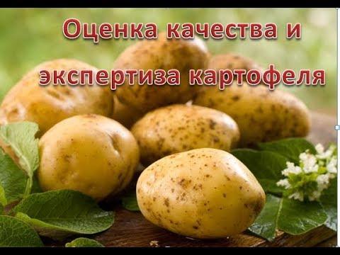 Картофель. Оценка качества. Экспертиза.