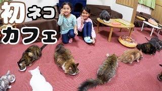 ●普段遊び●まったりと初ネコカフェ♡猫店長に怒られた ><まーちゃん【6歳】おーちゃん【4歳】#555