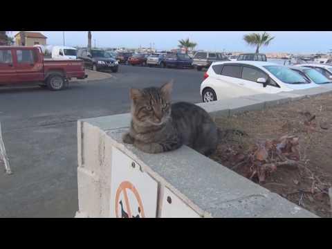 Почему на Кипре много кошек?