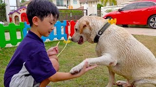 Kids Activity With Dog Bath Water Play Family Fun Playground
