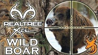 Driven Wild Boar Hunt - Czech Republic