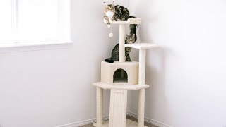 Unboxing & Setting Up Our New Frisco 52-Inch Cat Tree