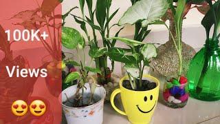 Water Growing Plants | Malayalam