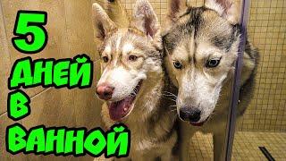 КТО ПОСЛЕДНИЙ ВЫЙДЕТ ИЗ ВАННОЙ, ПОЛУЧИТ ПРИЗ ЧЕЛЛЕНДЖ (Хаски Бублик) Говорящая собака