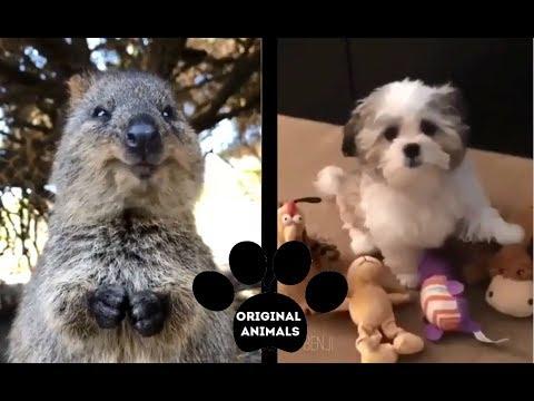 Original Animals #8. CUTE AND FUNNY ANIMALS VIDEO/ МИЛЫЕ И СМЕШНЫЕ ЖИВОТНЫЕ.