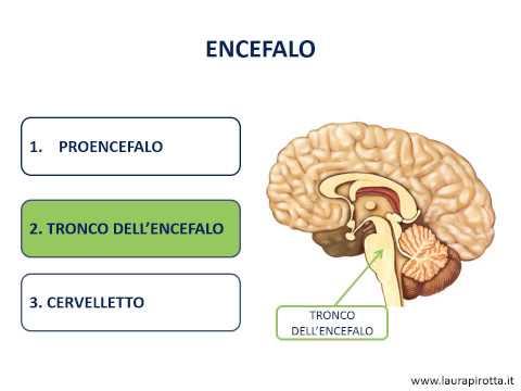 Esercizio ipertensione endocranica