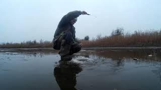 Демянск клев рыбы сегодня