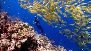 Coral Reef Aquarium & The Best Relax Music - 2 Hours - Sleep Music - HD 1080P