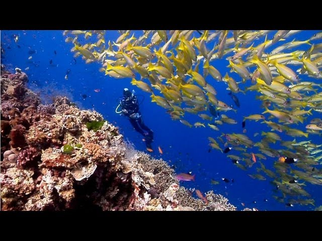 Australia's Great Barrier Reef | beautiful underwater nature | Scuba Diving the Ribbon Reefs HD