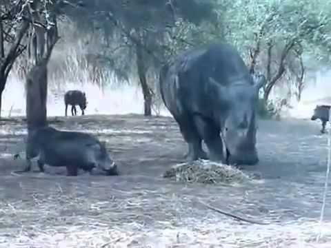 Đừng có đùa với tê giác