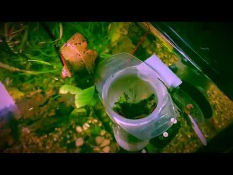 Tutorial  Skimmer superficie acquario fai da te diy