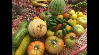 Vegetable Gardening in North Texas – What You Can Grow