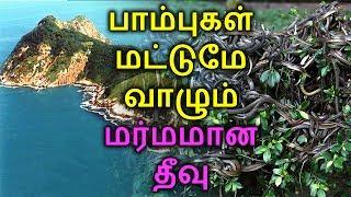 பாம்புகள் மட்டுமே வாழும் மர்மத் தீவு | Snake island | TAMIL ONE