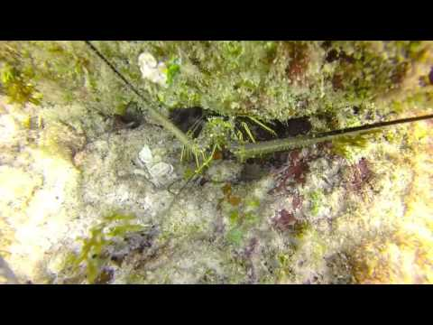 Diving with Wet Set in Puerto Morelos, Mexico #2
