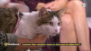 Comment faire cohabiter chiens et chats sous un même toit ?