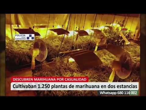 Desmantelado punto de venta de hachís y marihuana en Camarma de Esteruelas