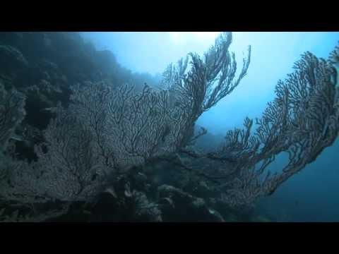 Act II - Oceanic SubterfugeAct II - Oceanic Subterfuge