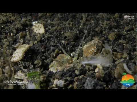 Mula sa alinman sa mga worm ay tumutulong bawang
