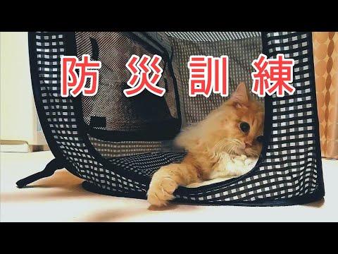 猫壱ポータブル (携帯・防災用品)