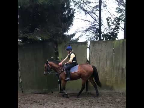 Avon Breeze's filly being ridden for the first time.